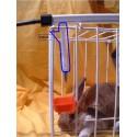 Prolongateur abreuvoir-sucette lapin