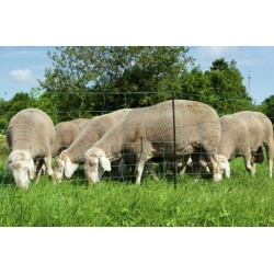 Filet Mouton double pointe OVINET Vert - 90cm  TRANSPORT OFFERT