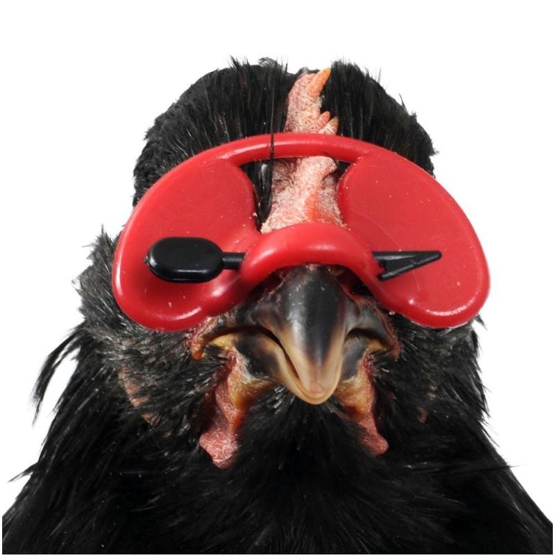 Comment mettre lunettes poules