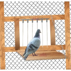 Clapette pour pigeons