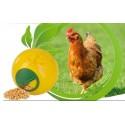 Boule à friandise volaille chicken