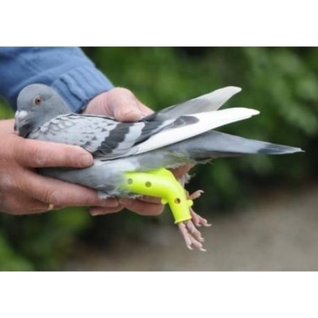 Colomboclip - Prothèse pour pigeons