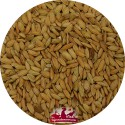 Riz Paddy - Sac de 20kg