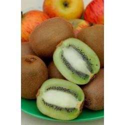 "Kiwi ""HAYWARD"" (femelle) - ACTINIDIA chinensis ""HAYWARD"""