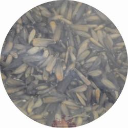 Graine de tournesol noir micro - 1kg