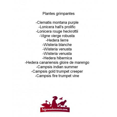 Liste plantes grimpantes, non exhaustive