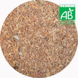 Aliment - Granulés Poule Pondeuse BIO - 25kg
