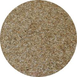 Graines d'Alpiste / Millet plat - Sac de 20kg