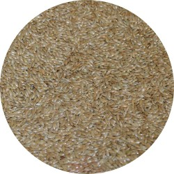 Graines d'Alpiste / Millet plat - Sac de 3kg