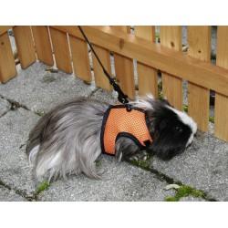 Harnais agility pour lapin ou cochon d'indes