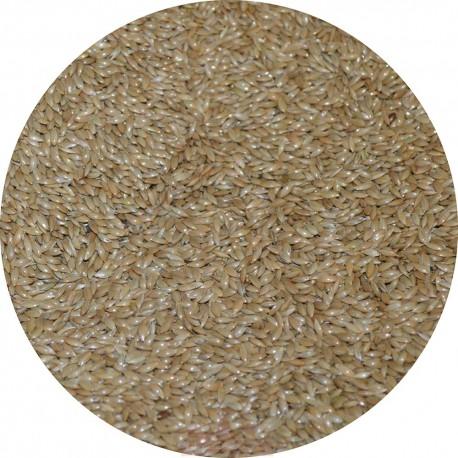 Graines d'Alpiste / Millet plat - 20kg