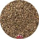 Graine de chanvre - 20kg