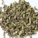 Crispy's larves séchées - 39% de Protéines