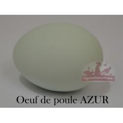 Oeufs fécondés poule azur - A emporter