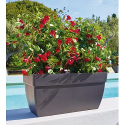 Jardinière / Bac à fleurs XL