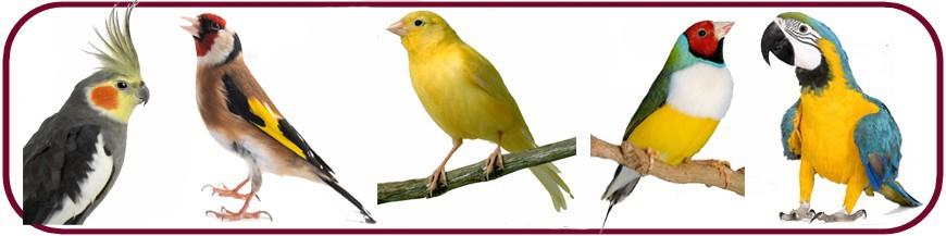 Oiseaux de cage et volière